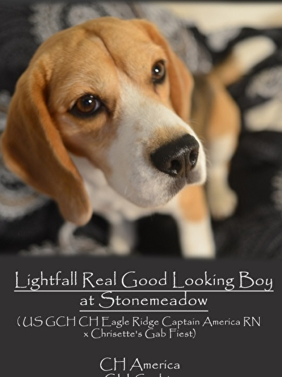 CH Lightfall Real Good Looking Boy