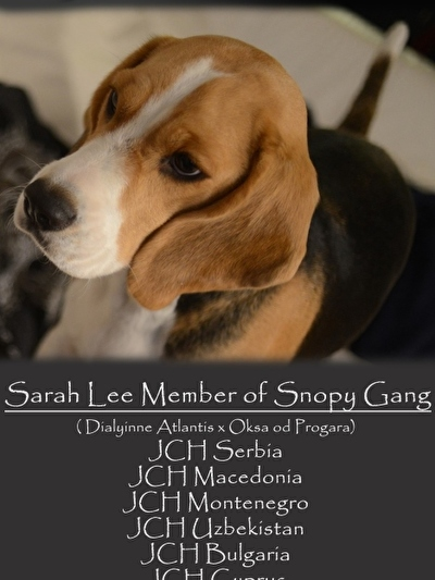 CH Sarah Lee Member of Snoopy Gang